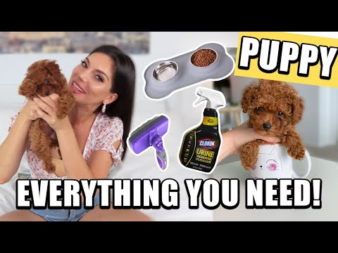 NEW PUPPY HAUL! MUST HAVES FOR DOGS! 2020