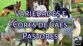 Variedades e Cores de Cães Pastores!