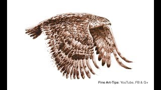 How to Draw a Flying Hawk With Fountain Pen - Narrated