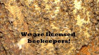 Rockwall County, Texas  AA Bee Removal Experts, Rockwall County, Texas