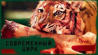 Цирк без животных [современный цирк]