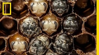 Amazing Time-Lapse: Bees Hatch Before Your Eyes