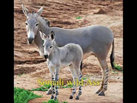 Donkey Breeds - YouTube