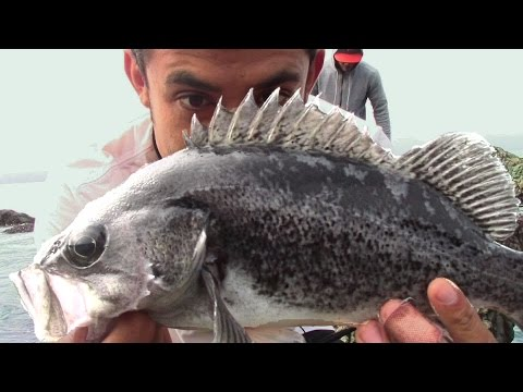 Tips To Catch Black Rockfish And Lingcod + How To Tie The FG Knot (Best Braid To Mono Knot Ever!)
