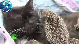 Ешкин кот