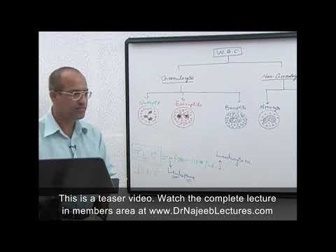 Leukocytes - White Blood Cells - Immune System