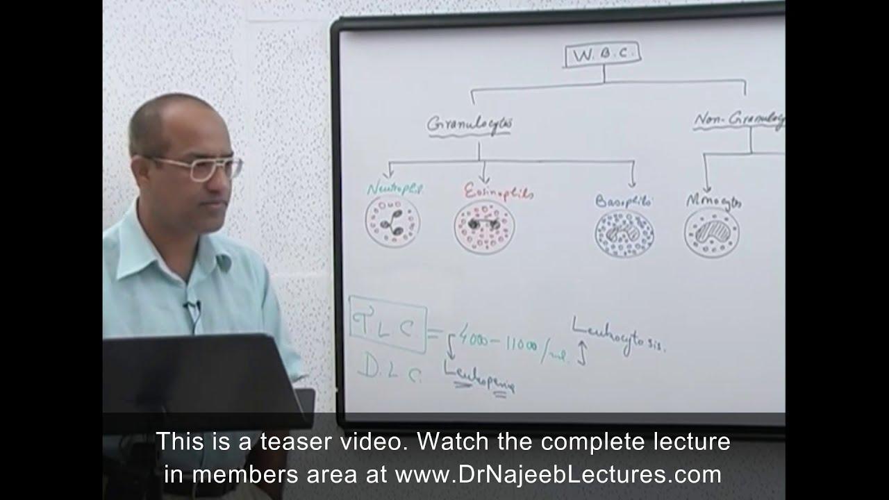 Leukocytes - White Blood Cells - Immune System