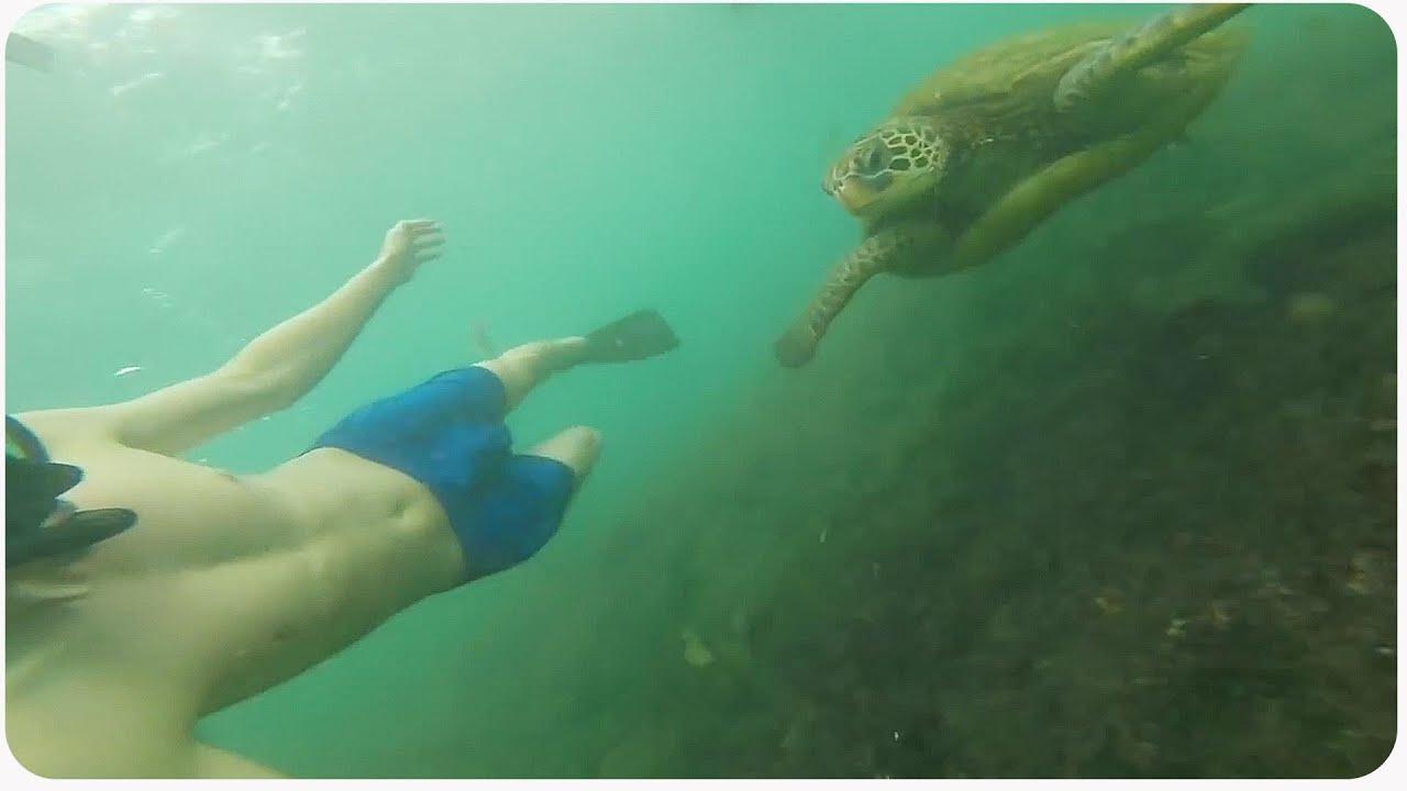 Awesome Galapagos Island Vacation Trip Highlife YouTube - Galapagos vacations
