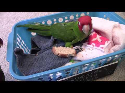 Jealous Parrot