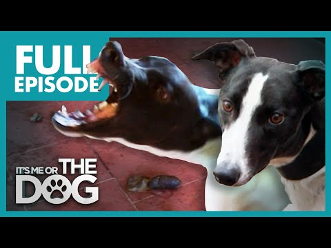 The Savage Sisters: Roxy and Rio | Full Episode | It's Me or the Dog