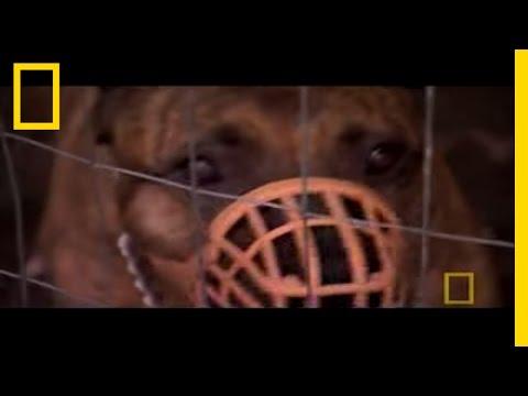 Surrendering Territory   Dog Whisperer