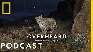 Searching for the Himalayas' Ghost Cats | Podcast | Overheard at National Geographic