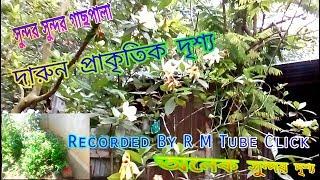 অনেক সুন্দর🌼সুন্দর দৃশ্য   Daron Sundor Drisho Video   R M Tube Click Recorded