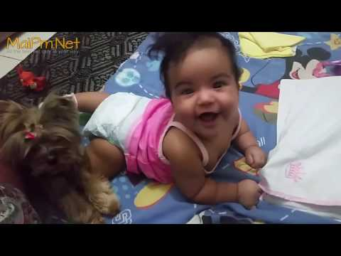 Dogs Protecting Babies Kids - Loyal Dog Doesn't Allow Anything Danger to the Owner