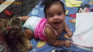 Dogs Protecting Babies Kids - Loyal Dog Doesn't Allow Anything Danger to the Owner thumbnail