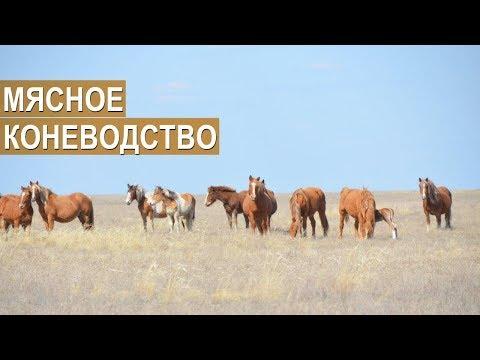 видео: Фермер Мякишев С.И. О мясном коневодстве в Волгоградской области