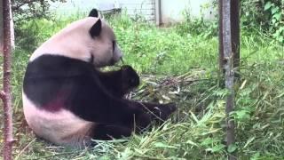 Edinburgh Zoo 2015
