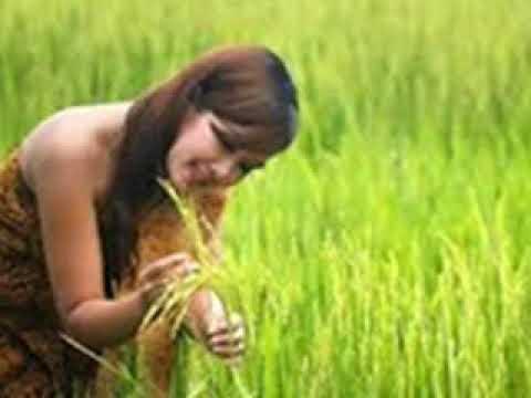 8 Arti Mimpi Lihat Padi Di Sawah Menurut Primbon Jawa