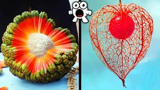 CRAZY Fruits Youve Never Heard Of!