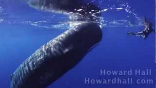 あのダイオウイカの天敵がコレ。マッコウクジラと泳ぐダイバーたち
