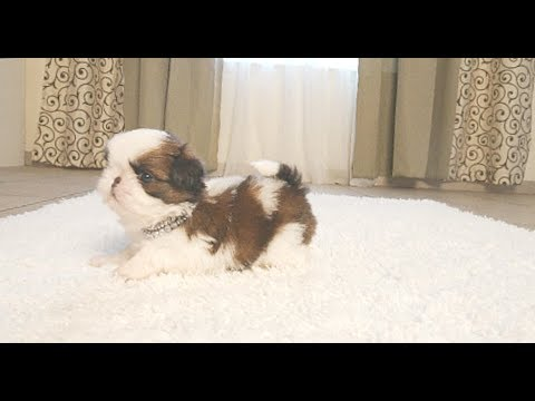Warning This Fur Ball is Alive | Too Cute
