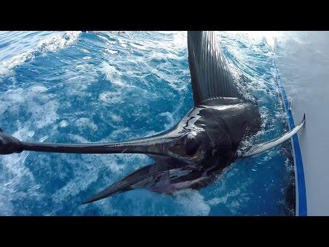 Deluge Of Sailfish: Fishing In Guatemala
