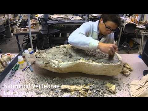 Fossil Preparation Time Lapse