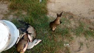 Рыбалка на небольшом озере ЄСЛИ БИ Я ЗНАЛ ЧТО ОЗЕРО ЧТО ОЗЕРО ЧАСНОЄ !!!