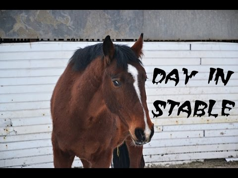 day in stable