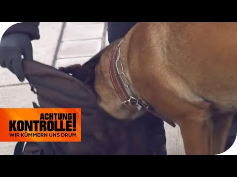 Großeinsatz in einem Fernbus: Spürt der Hund verbotene Mittel auf? | Achtung Kontrolle | kabel eins