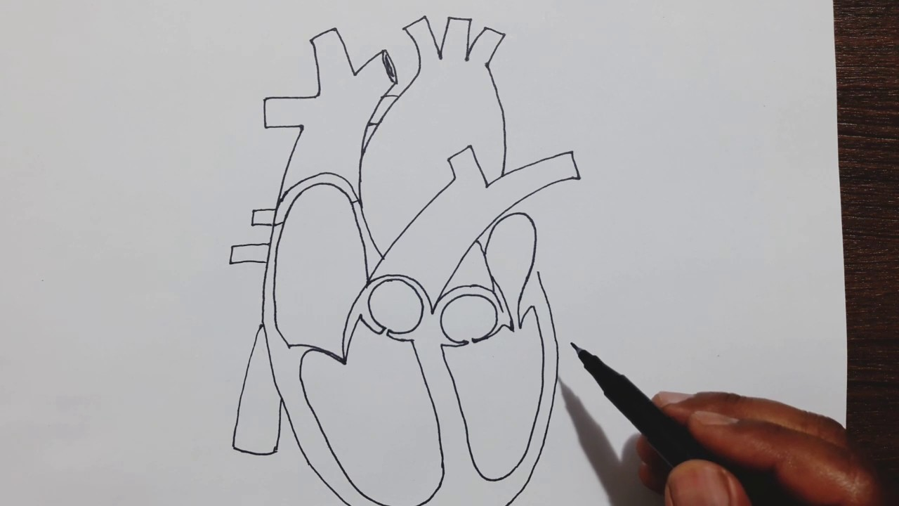 diagram of drawing easy trick to draw human heart youtube diagram of dragonfly easy trick to draw human heart youtube