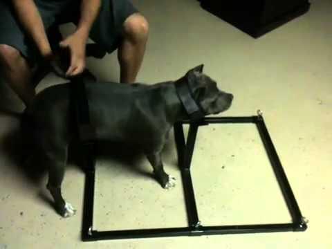 Statistics On Forced Dog Breeding