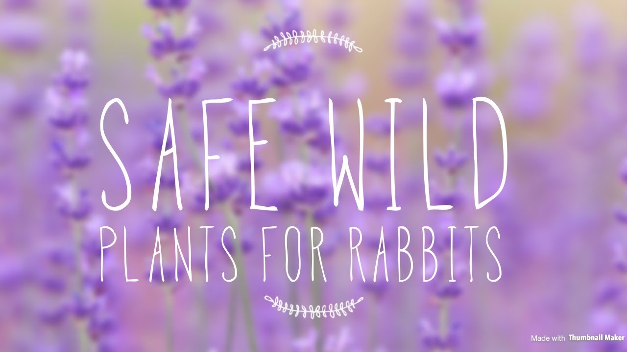 safe wild plants for rabbits