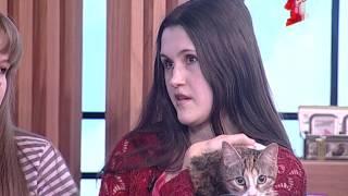 Найди себе друга - раздаем котов в Самые добрые руки