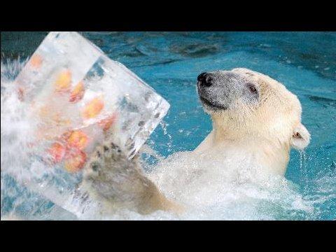 「しろくま 氷」の画像検索結果