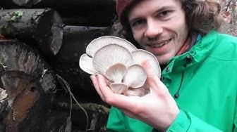 Pilze Mitte Januar 2020 - Die fungitastische Lebensmittelampel