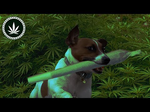 ANIMALS ON WEED