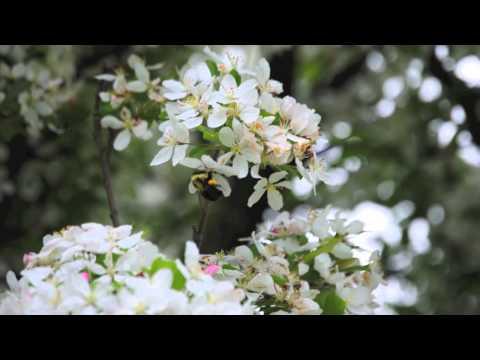Berkshire Botanical Garden, Stockbridge, Massachusetts
