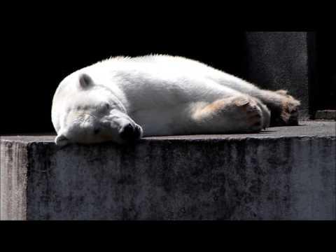 Обитатели льдов: тюлени, пингвины, белый медведь