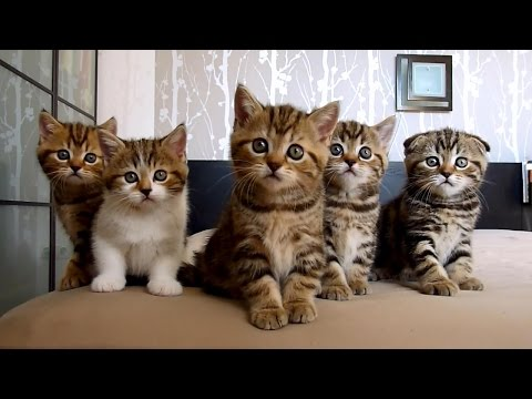 The best Funny Playing Cats and Dancing Kittens Compilation | Try not to laugh !