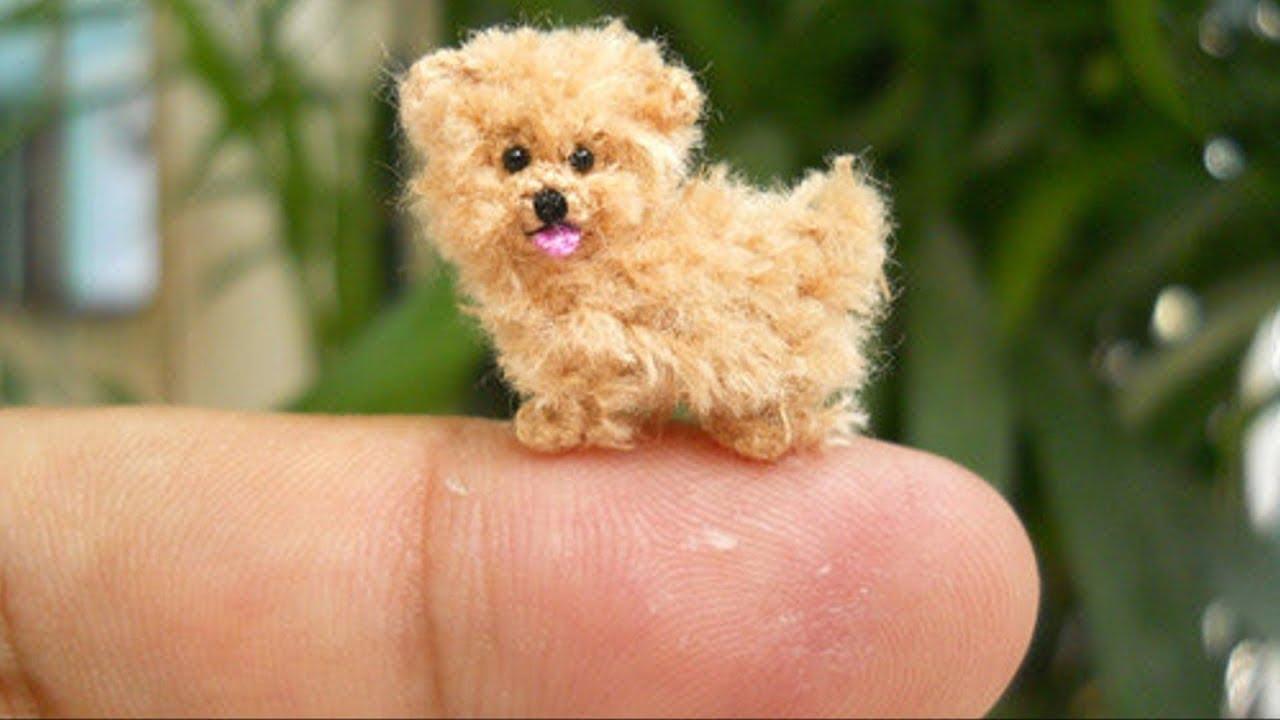 هذا اصغر  كلب في العالم ..دخل موسوعة جينيس للارقام القياسية