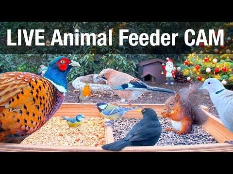 LIVE 4K Wild Animal & Bird Feeder Cam - Recke, Germany - Hedgehog & Bird Watching, 24/7, ASMR