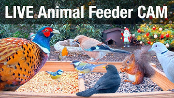 LIVE Wild Animal & Bird Feeder Cam - Recke, Germany (Hedgehog & Bird watching for cats)