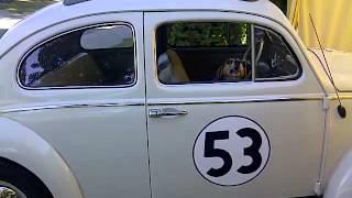Boomer as Herbie's car alarm