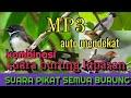 Suara Pikat Semua Burung Part  Mp3 - Mp4 Download