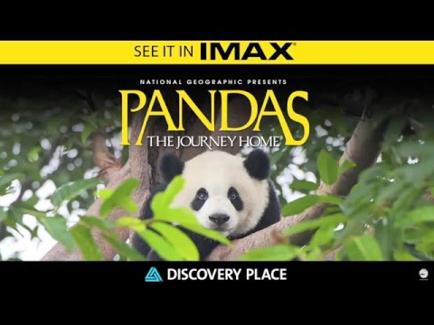 Pandas: The Journey Home - Now Showing in IMAX at Discovery Place