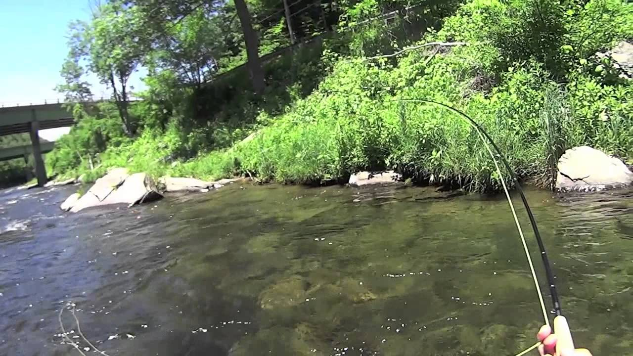 W4f fly fishing beaverkill river roscoe ny youtube for Roscoe ny fishing