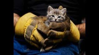 Люди спасают животных...До слез!!!