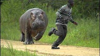 [Best Animal Fights]  [Wild Animal Attack]  Animal Vs Man - Animal Attack Humans - Live Dead -Funni