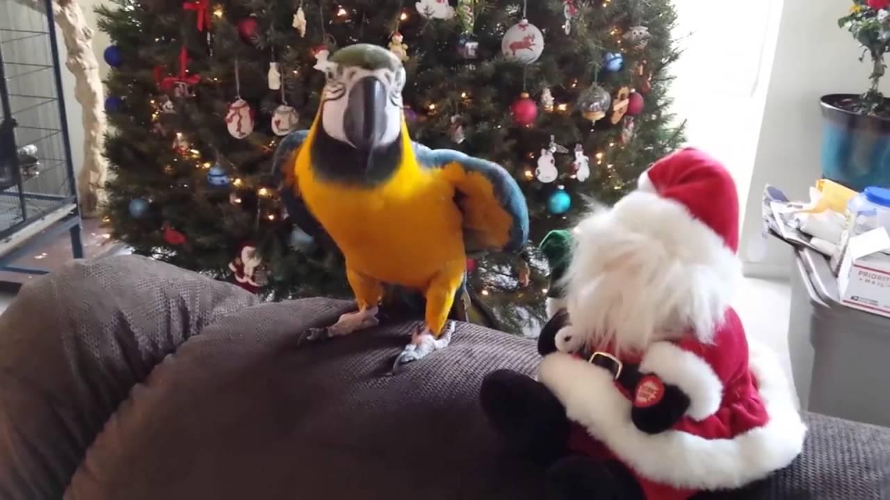 【爆笑必至www】笑える鳥シリーズ!【声おっさん】 Humorous birds